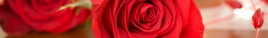 I just adore roses border