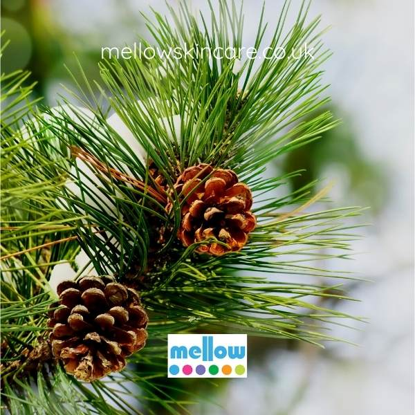 capture-fragrance-christmas-essential-oils-pine-tree